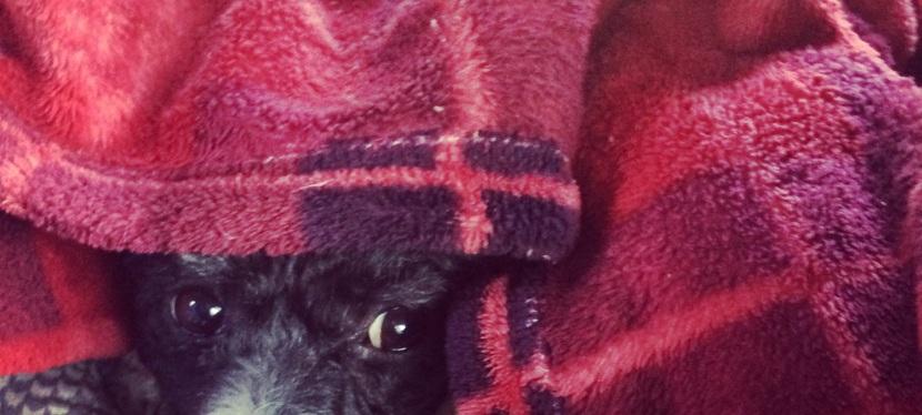 Princess Puppydog