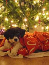 The pup, hanging out under our Christmas tree a few years ago