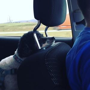 "We probably should have had Cam's ""seatbelt"" a bit shorter. ;-)"
